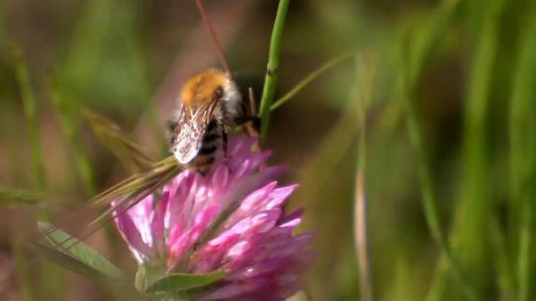 Germania, il 75% degli insetti scomparso negli ultimi 30 anni