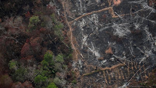 Amazzonia, scienziato della NASA smonta con immagini satellitari le accuse di Bolsonaro