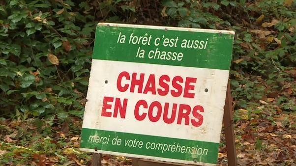 Des chiens tuent une femme en France, le conjoint accuse une chasse à courre
