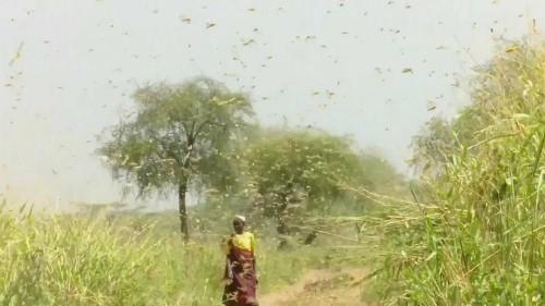 No Comments der Woche: Heuschrecken, Wasser und Virus