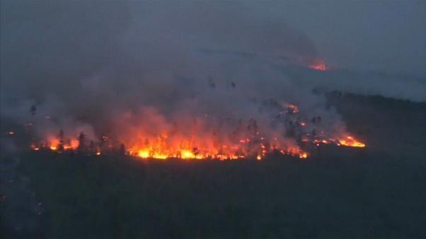 Brände vernichten den Lebensraum Wald