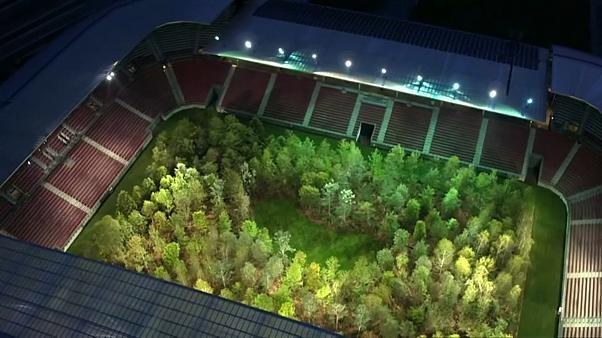 Bäume statt Fußball: Künstler pflanzt Wald in österreichischem Stadion