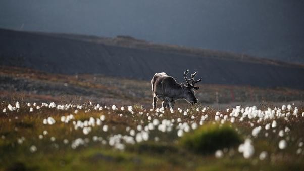 Reindeer accident hospitalises a dozen Finnish soldiers in Lapland