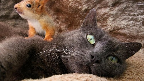 Unconventional family: cat raises four baby squirrels alongside new kittens