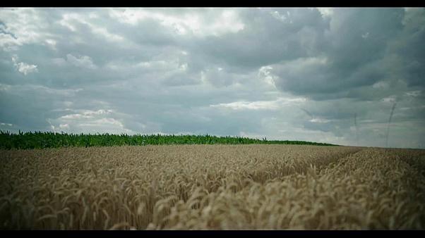 """Ungarische Dokumentation: Gesunde Böden statt """"Vergifteter Erde"""""""