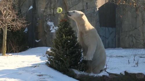 Festin de Noël pour les animaux du zoo de Brookfield