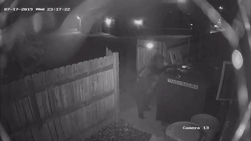 Un ours filmé en train de voler une poubelle aux États-Unis