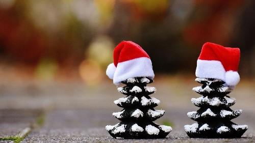 Die hard eco-warriors make their own Earth-friendly Christmas trees