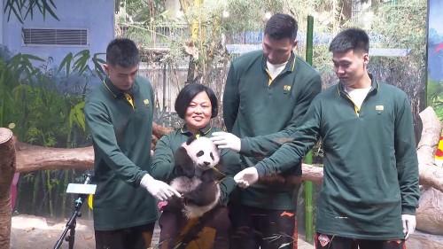 Le zoo de Chimelong, au sud de la Chine, fête les 100 jours de son panda géant