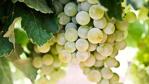 My discovery of Spain's organic wine