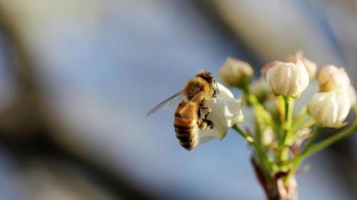 6 Simple ways to help bees