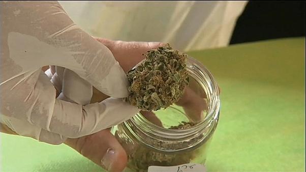 Deutschland: Medizinisches Cannabis ist Mangelware