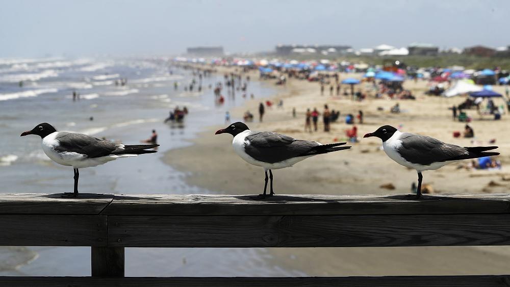 No Comment : les Texans retournent à la plage malgré le Covid-19