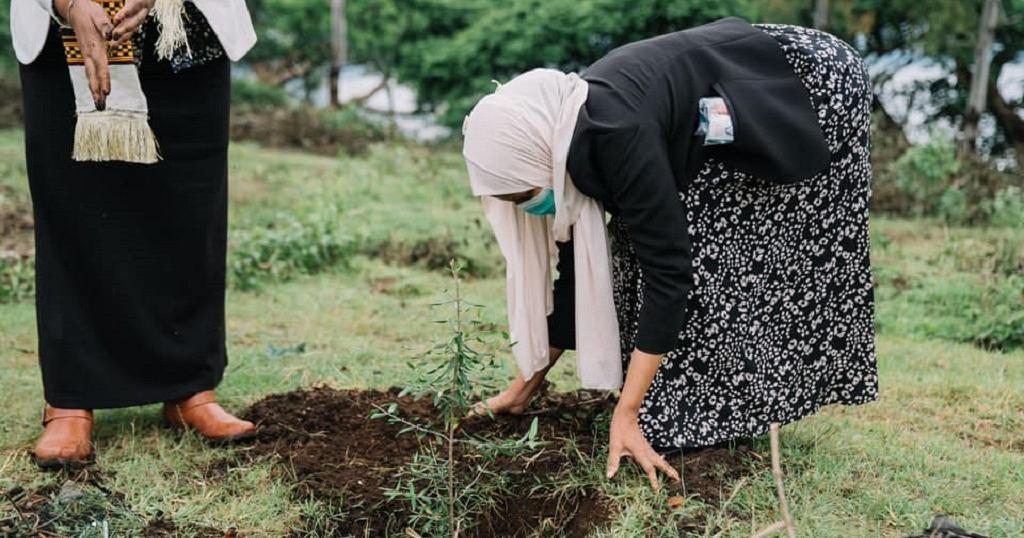 Green Legacy: Ethiopia's 5 billion tree seedlings project kicks off | Africanews