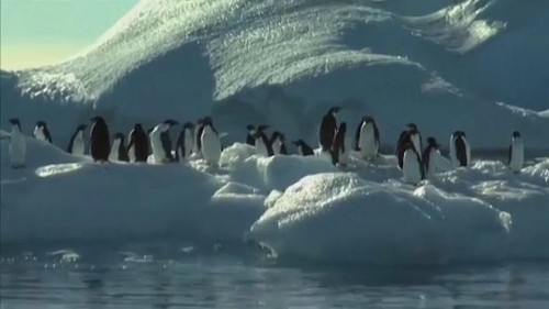 Allarme Antartide: i ghiacci si sciolgono troppo velocemente