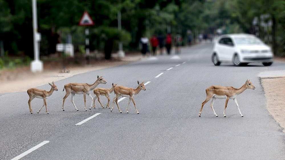 Busy roads threaten species with extinction: Why is roadkill an environmental disaster?