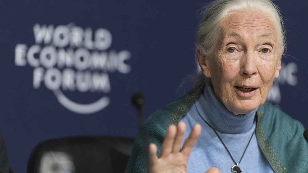 Humans' 'disrespect of nature' is partly to blame for COVID-19: Jane Goodall