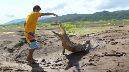 Costa Rican man faces down hungry crocodiles to make ends meet