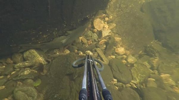 Jagd auf ausgebüxte Lachse in Norwegen