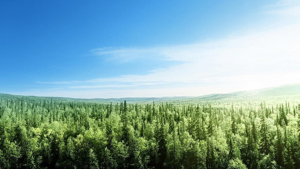 3 billion trees to be planted across Europe by 2030 as part of a plan to restore nature