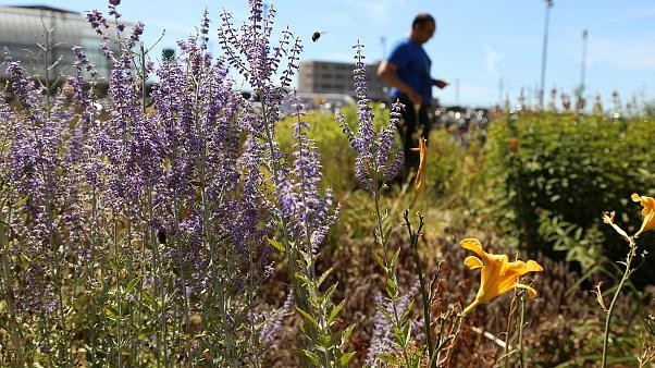 Bees are dying at an alarming rate. Amsterdam may have the answer.