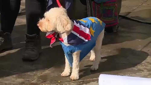 'Dogs dinner' anti-Brexit protest at UK parliament