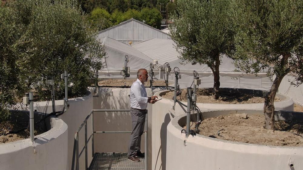 Olivenanbau der Zukunft: Smarte Landwirtschaft auf Kreta