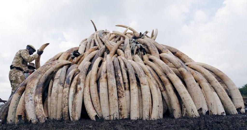 Singapore announces 2021 ban on domestic elephant ivory trade