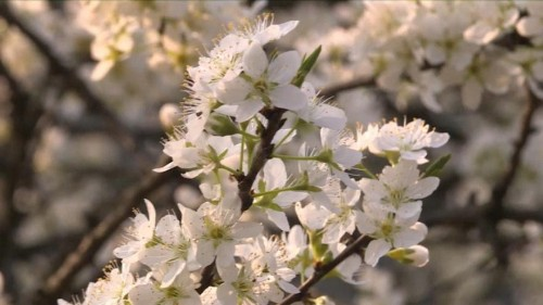 Spring brings vitality to China's Guizhou Province