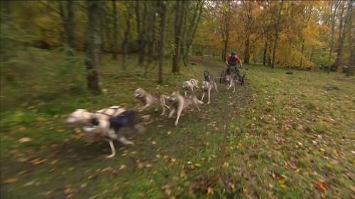 Ab durch den Matsch: Schlittenhundrennen in Südengland