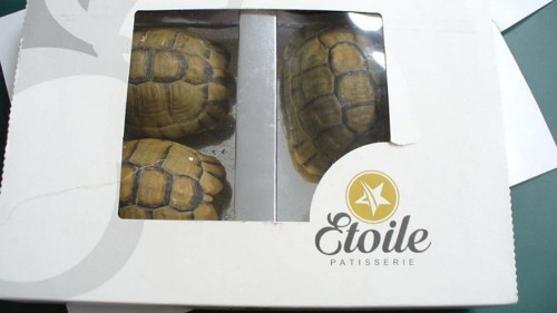 Man tries to smuggle tortoises disguised as chocolate