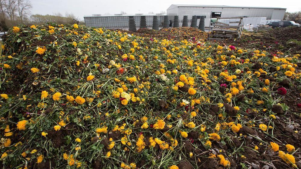 Printemps morose pour les fleuristes et les horticulteurs