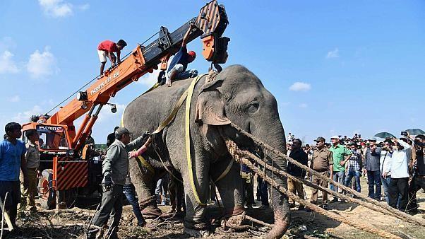 """Un nouveau """"ben Laden"""" - un éléphant ! - traqué pendant des jours en Inde"""