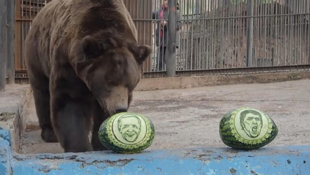 Русский медведь — за Байдена