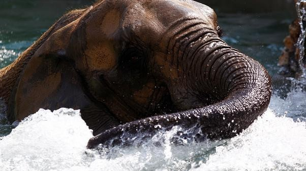 Watch: Elephants keep it cool amid high temperatures