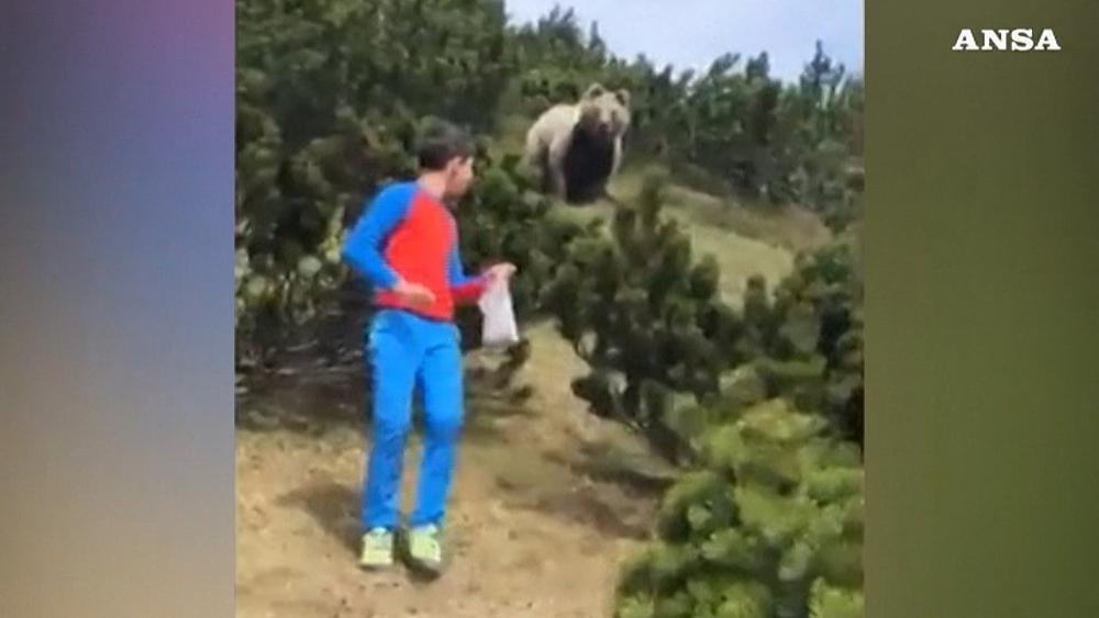 Italie : un enfant de 12 ans face à face avec un ours brun