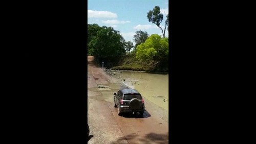 Echsen-Wildwechsel in Australien