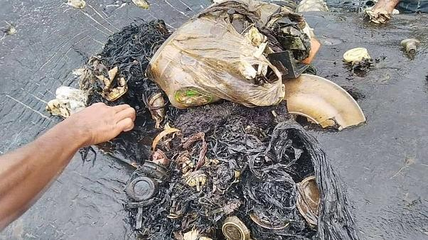 115 plastic cups, 4 bottles and 2 flip-flops found inside dead whale