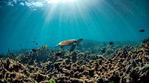 Is ocean acidification driving ecosystems to unknown territories?