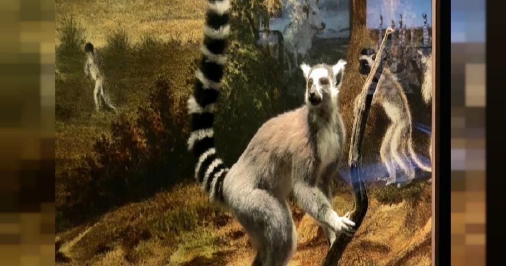 Le massif du Makay, un refuge de biodiversité à Madagascar   Africanews