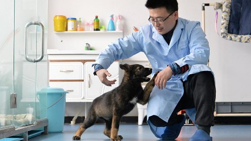 China clones 'Sherlock Holmes' of police dogs to cut training time, state media says