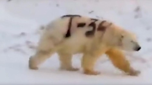 Video of spray-painted polar bear sparks concern, but experts say not to worry