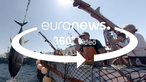 360° video: This ancient technique is the most sustainable way to catch tuna fish