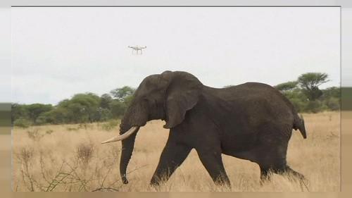 Dronlar fillerin hayatını kurtarıyor