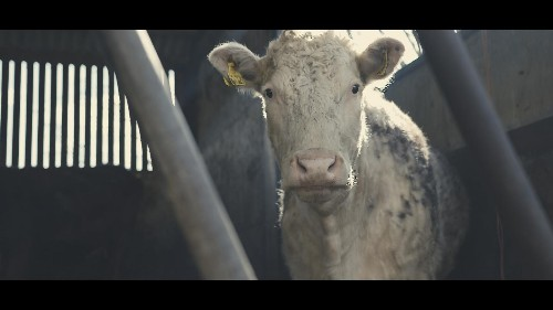 73 cows | The BAFTA winning short film that will move you to tears