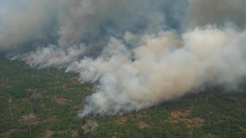 Trauriger Rekord: Amazonas-Regenwald schrumpft immer schneller