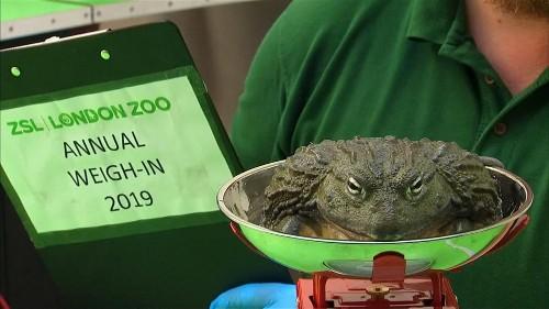 Londoner Zoo: Alle Tiere müssen auf die Waage