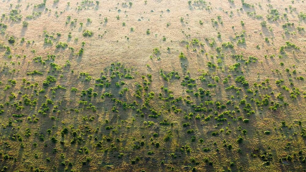 The Great Green Wall of Africa: Is this the next wonder of the world?