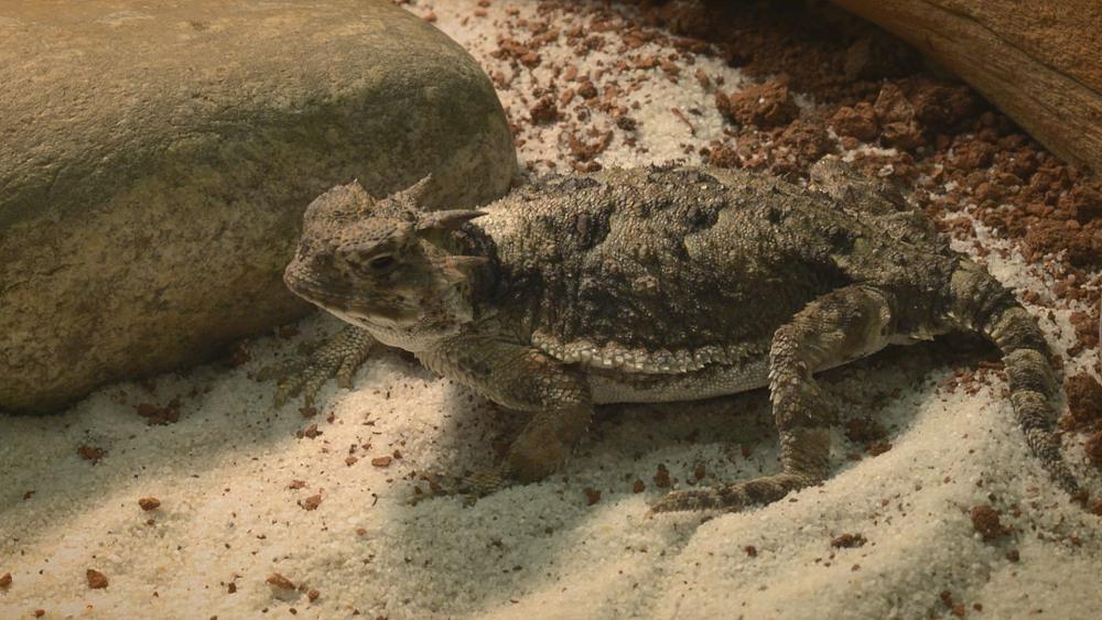 Kertenkele derisi üzerine araştırmalar