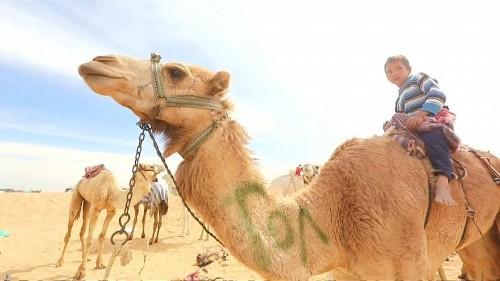Watch: Robot jockeys race against child riders in camel race